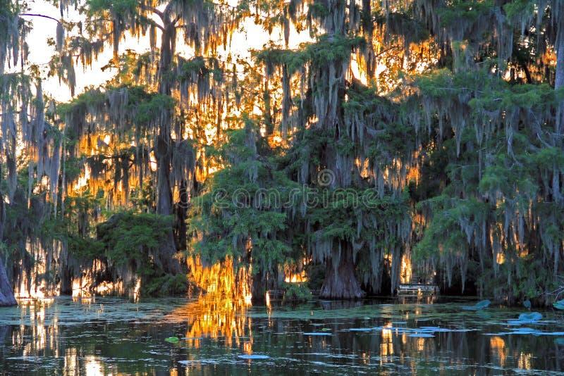 Поздно вечером сцена ландшафта в озере Мартине Луизиане стоковая фотография rf