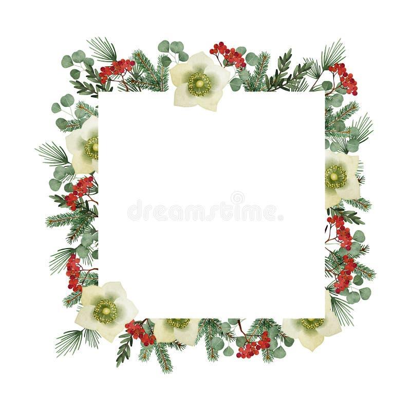 Поздравительная открытка рождества, приглашение Рамка акварели квадратная, граница Ветви сосны и эвкалипта, морозники иллюстрация вектора