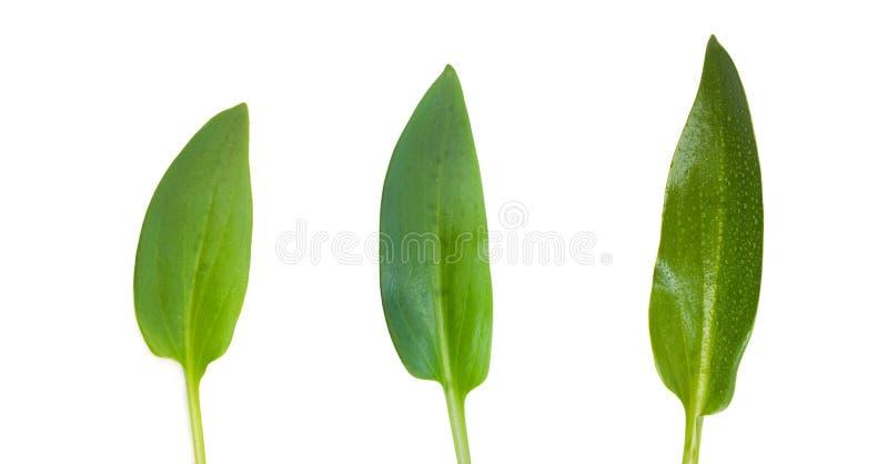 позеленейте листья стоковое фото rf