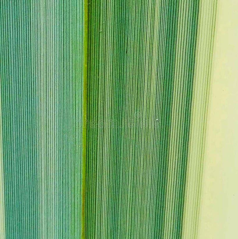 позеленейте текстуру листьев стоковые фотографии rf