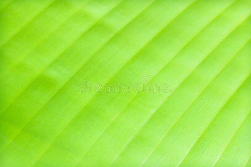Позеленейте предпосылку листьев банана стоковые фото