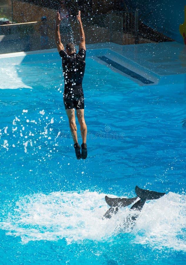 Покажите с дельфинами стоковые изображения rf