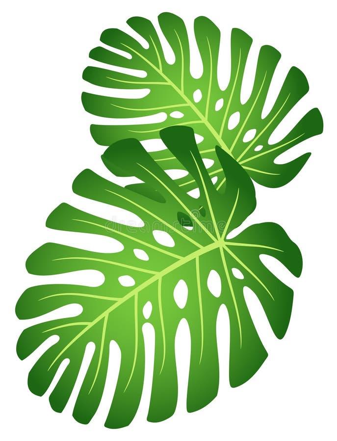 покидает завод monstera тропическим иллюстрация вектора