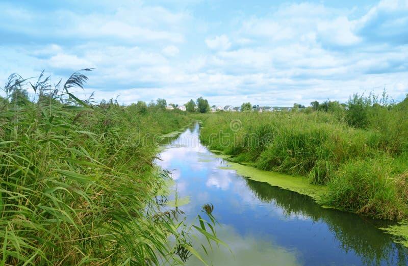 Покидающ в расстояние река с зелеными банками стоковое изображение rf