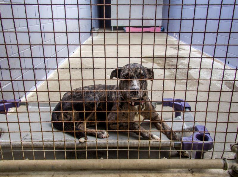 Покинутая собака приюта для бездомных за решеткой на фунте стоковое изображение