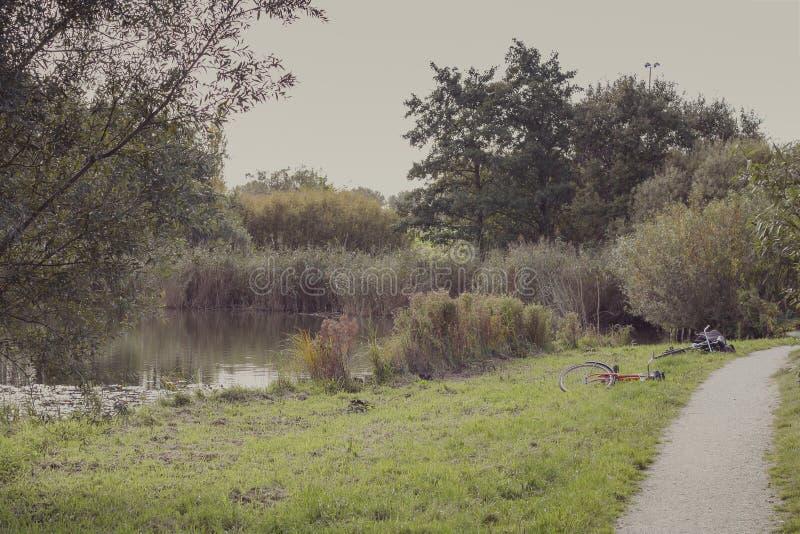 Покинутые пары велосипедов приближают к озеру и пути стоковая фотография