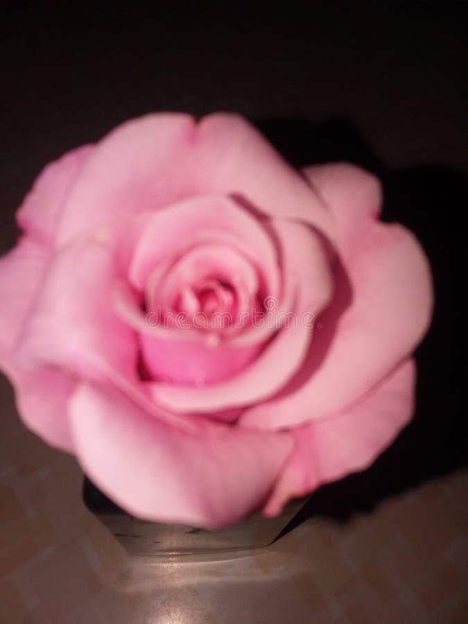 покраснейте розово стоковые изображения