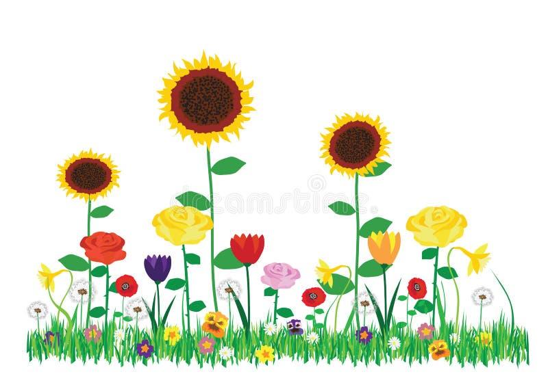 Покрасьте иллюстрацию вектора красивых зацветая цветков в саде изолированном на белой предпосылке бесплатная иллюстрация