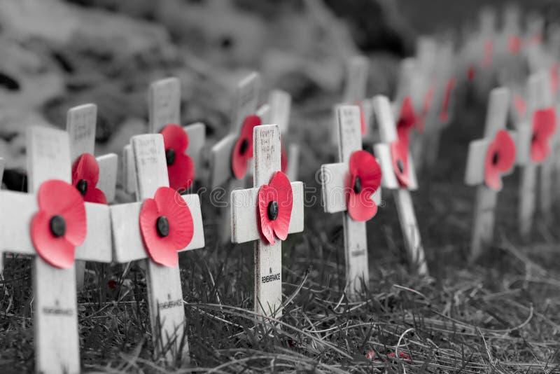 Покрасьте маки попа на деревянных крестах на день памяти погибших в первую и вторую мировые войны стоковое фото rf