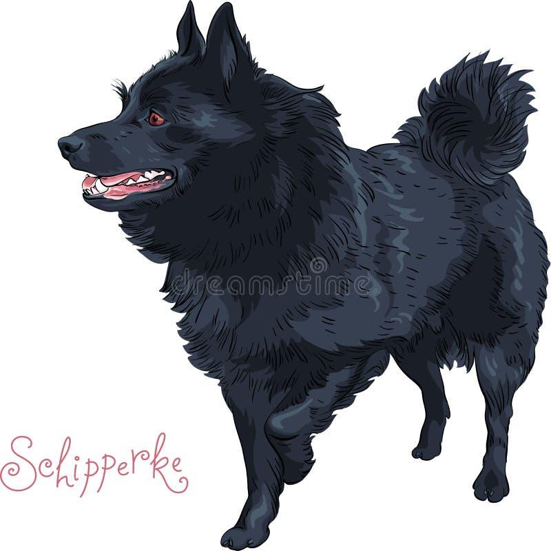Покрасьте породу Шипперке черной собаки эскиза иллюстрация штока