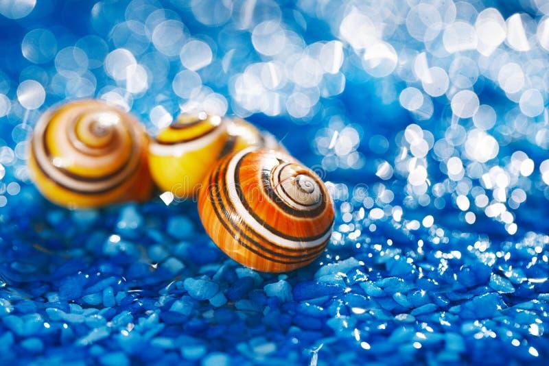 покрасьте раковину моря на голубом камешке под водой стоковые фотографии rf