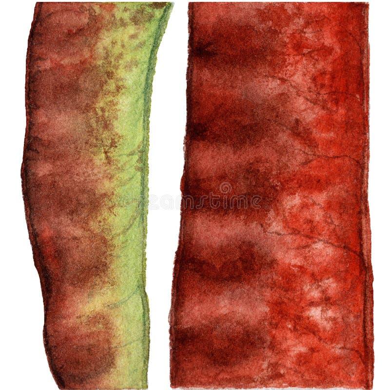 Покрасьте фасоли и стручок изолированными, иллюстрацию акварели на белизне бесплатная иллюстрация