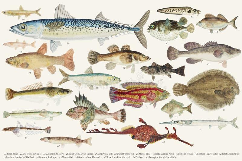 Покрашенная иллюстрация собрания чертежа рыб иллюстрация вектора