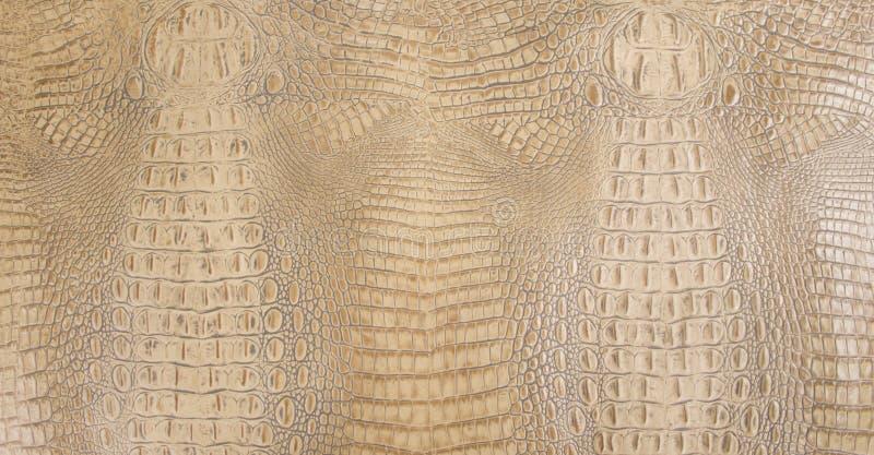 Покрашенная косточкой выбитая текстура задней кожи аллигатора стоковые фотографии rf
