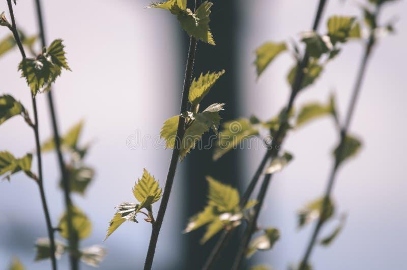 покрашенное золото осени выходит в яркий солнечный свет - винтажный старый взгляд стоковое фото