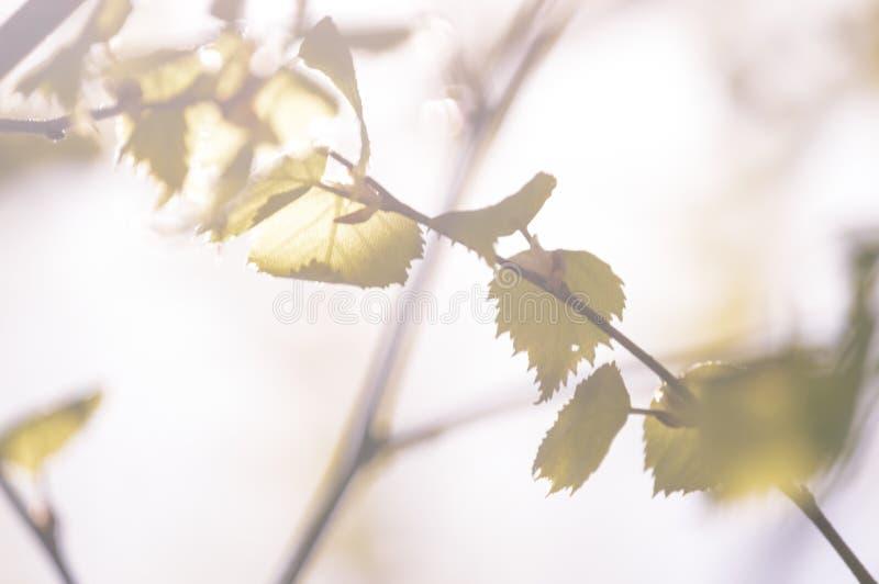 покрашенное золото осени выходит в яркий солнечный свет - винтажный старый взгляд стоковое фото rf