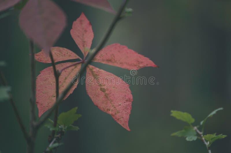 покрашенное золото осени выходит в яркий солнечный свет - винтажный старый взгляд стоковые фотографии rf