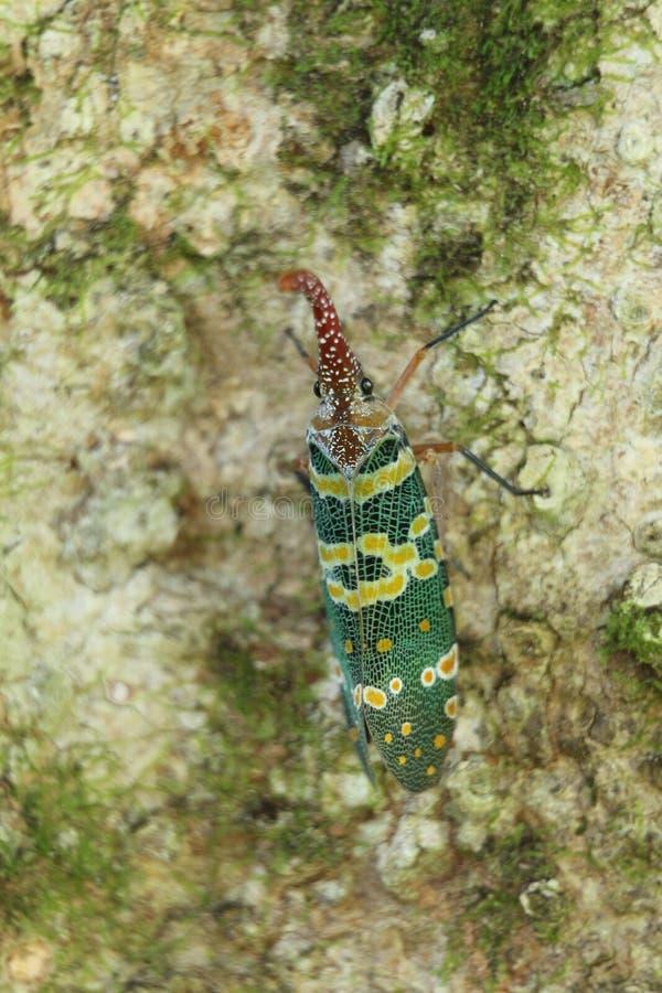 Покрашенное насекомое на листьях в сельском районе Гонконга стоковая фотография