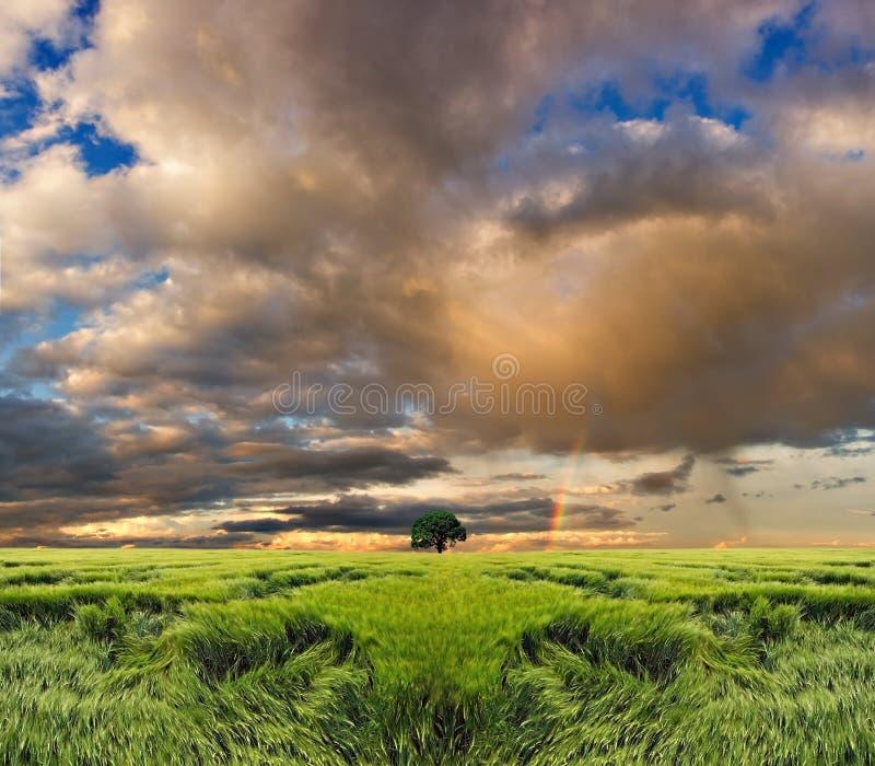 покрашенное поле над небом стоковое фото