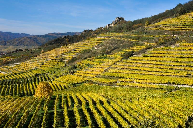 Покрашенные виноградники около Duernstein в осени стоковая фотография