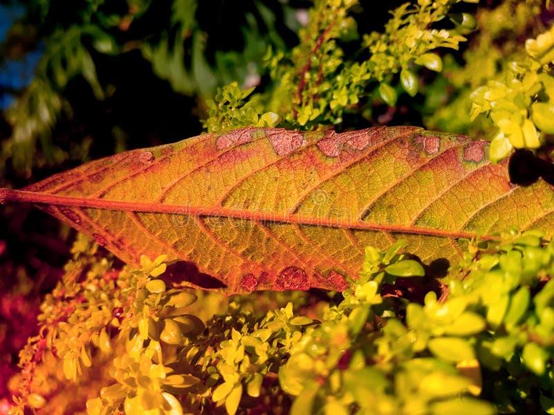 покрашенные листья стоковые изображения