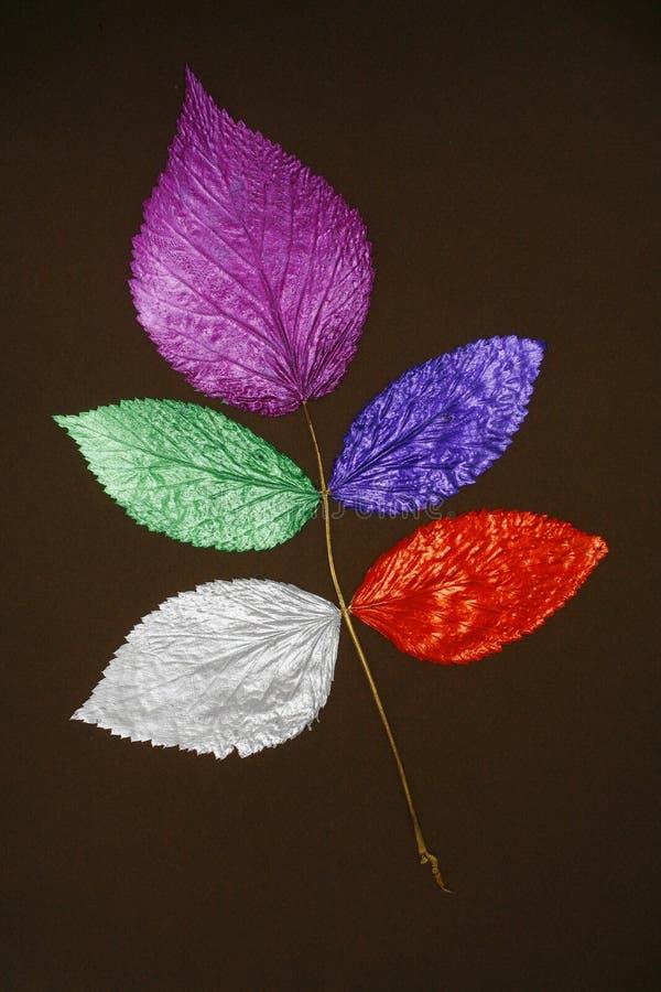 покрашенные листья коллажа стоковые изображения