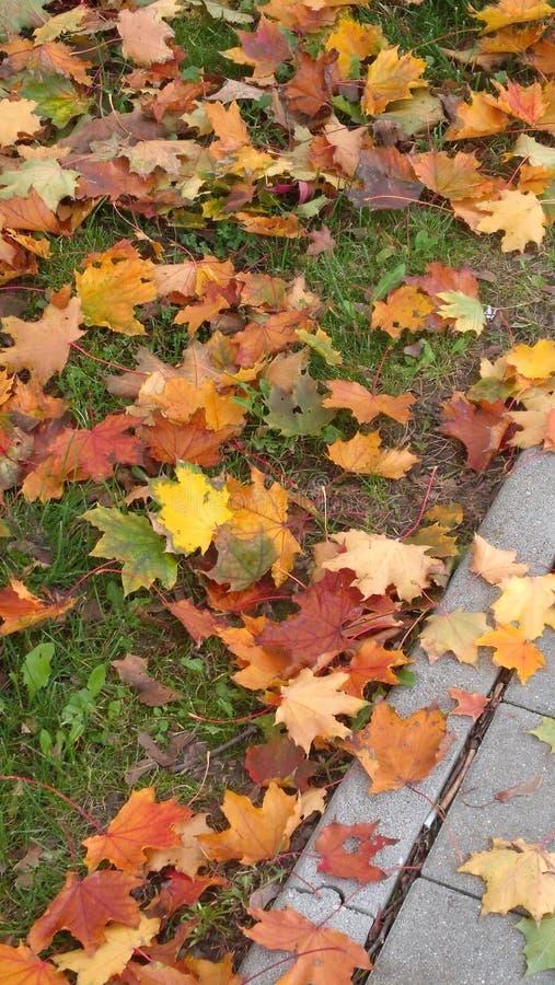 Покрашенные листья стоковые фотографии rf