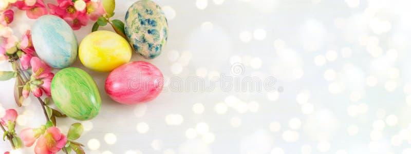 Покрашенные пасхальные яйца и цветки японца розовые стоковые изображения