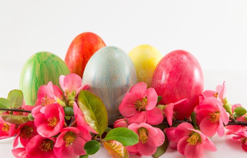 Покрашенные пасхальные яйца и цветки японца розовые стоковая фотография