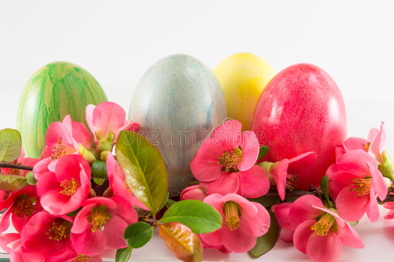 Покрашенные пасхальные яйца и цветки японца розовые стоковые фото