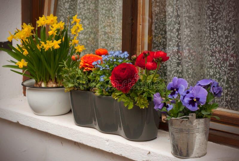 Покрашенные цветки весны в баке на окнах стоковые фотографии rf