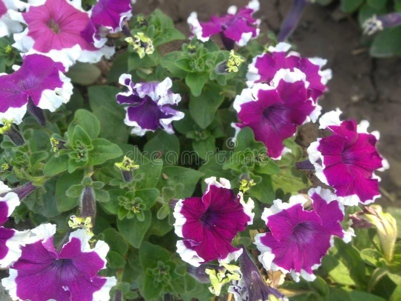 Покрашенные цветки в парке стоковое изображение