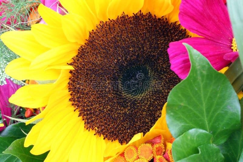 покрашенные цветки стоковое изображение rf