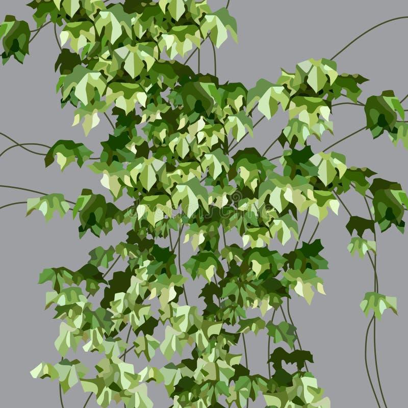 Покрашенный зеленый завод плюща на серой стене иллюстрация вектора