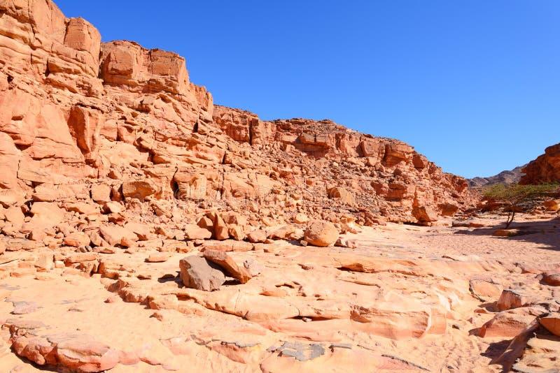 Покрашенный каньон в пустыне Синая, Египет стоковое изображение rf