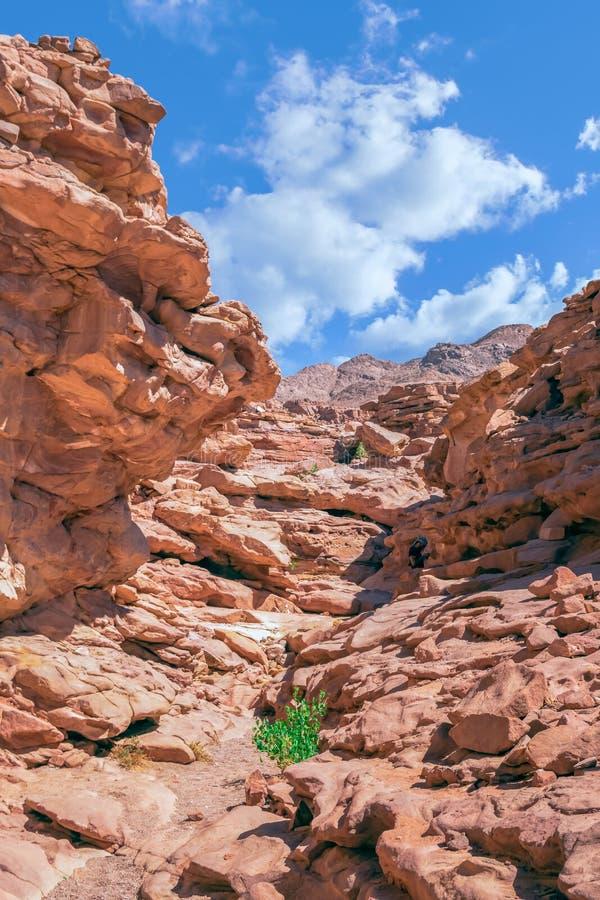 Покрашенный каньон в Nuweiba Dahab стоковое изображение rf