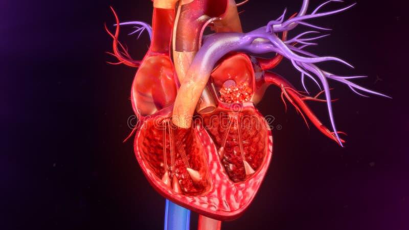 покрашенный оригинал иллюстрации сердца руки анатомирования людской стоковое изображение rf