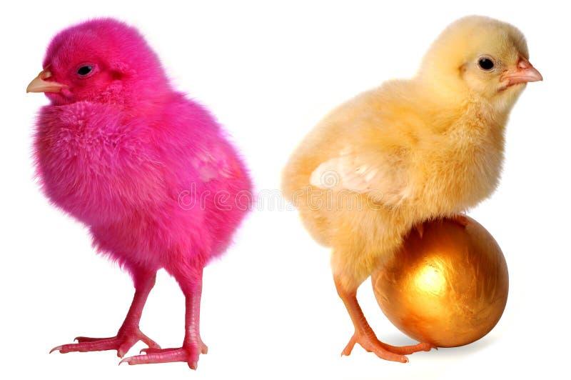 Покрашенный принесенный цыпленок стоковая фотография rf