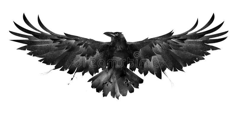 Покрашенный фронт вороны птицы на белой предпосылке иллюстрация штока