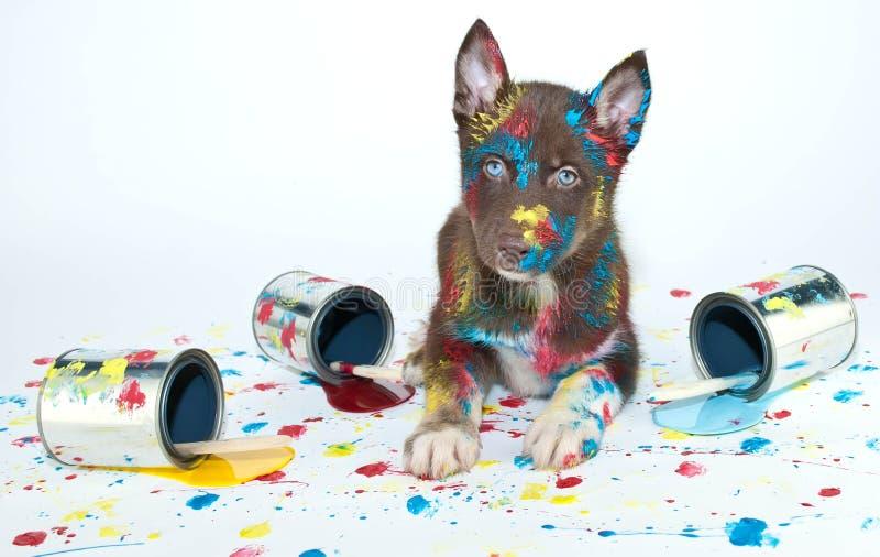 Покрашенный щенок стоковые фото