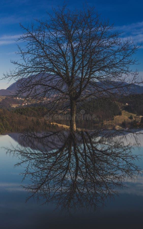 покрашенный Re-дерев-flection стоковое изображение