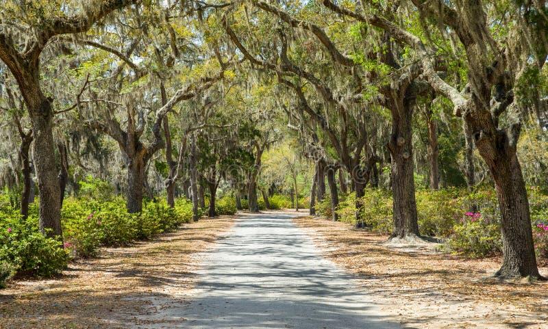 Покрытая сельская дорога в американском юге стоковая фотография