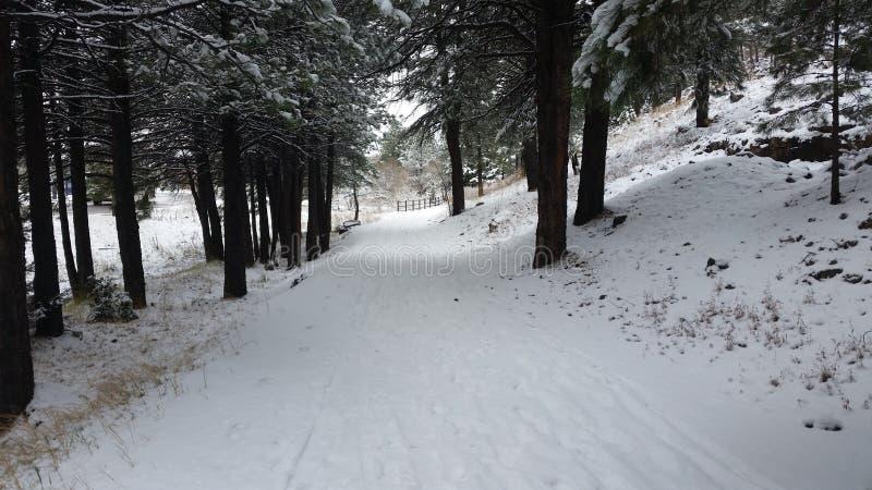 покрытая Снег прогулка стоковые фотографии rf