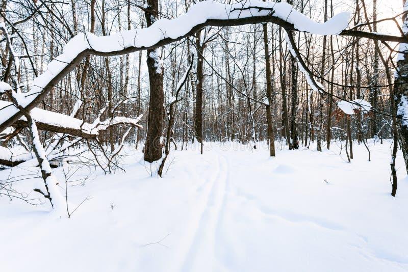 покрытое Снег дерево над следом лыжи в городском парке стоковые фотографии rf
