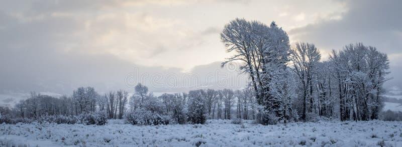 покрытое Снег небо treeline и утра стоковые изображения rf
