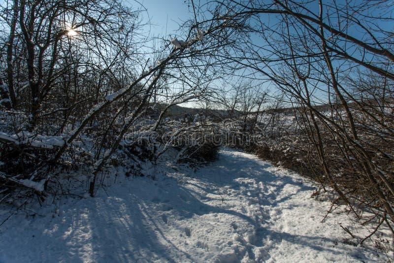 покрытые валы снежка пущи стоковое фото