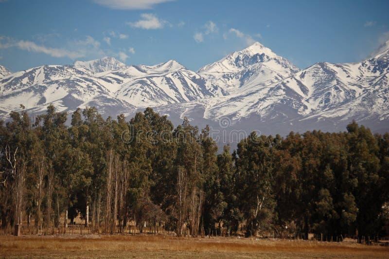 покрытые верхние части снежка горы пущи стоковое изображение rf