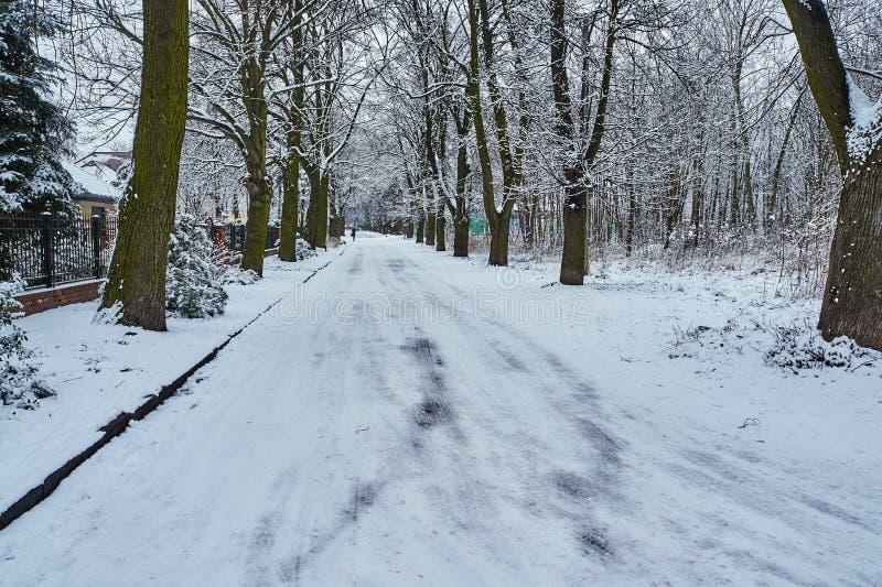 покрытые Снег ветви деревьев и грязной улицы стоковые фото