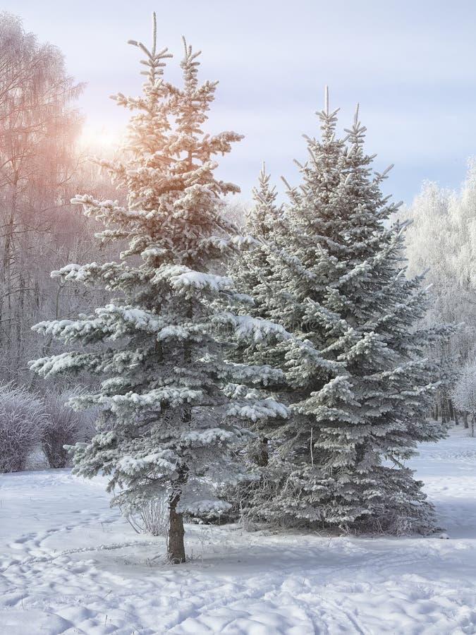 покрытые Снег деревья в парке города стоковые изображения