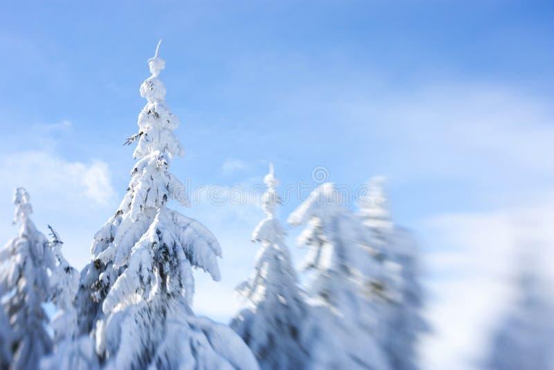 покрытый вал снежка стоковые фотографии rf